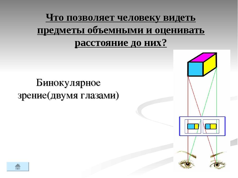 Что позволяет человеку видеть предметы объемными и оценивать расстояние до ни...