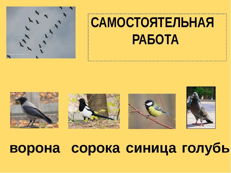 САМОСТОЯТЕЛЬНАЯ РАБОТА голубь ворона сорока синица
