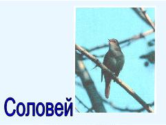 hello_html_4bd2c1ff.jpg