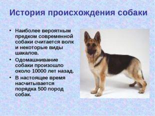 История происхождения собаки Наиболее вероятным предком современной собаки сч