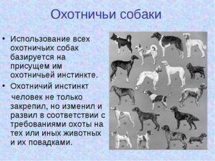 Охотничьи собаки Использование всех охотничьих собак базируется на присущем и