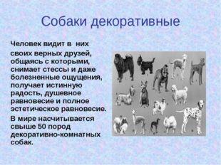 Собаки декоративные Человек видит в них своих верных друзей, общаясь с которы