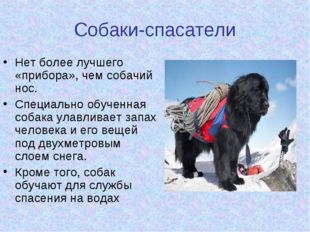 Собаки-спасатели Нет более лучшего «прибора», чем собачий нос. Специально обу