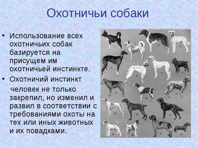 Охотничьи собаки Использование всех охотничьих собак базируется на присущем и...