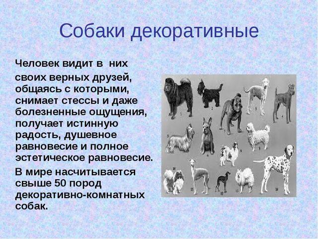 Собаки декоративные Человек видит в них своих верных друзей, общаясь с которы...