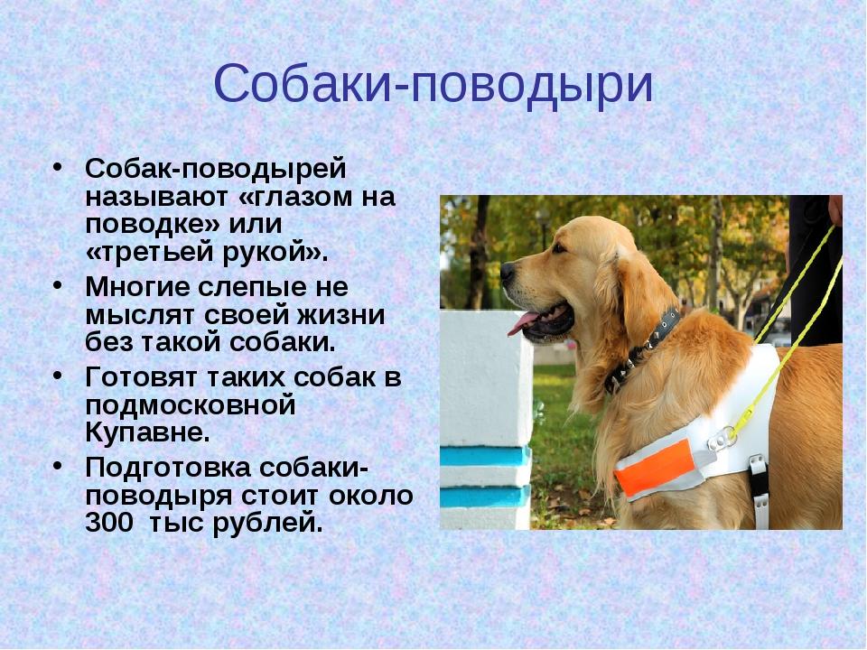 Собаки-поводыри Собак-поводырей называют «глазом на поводке» или «третьей рук...