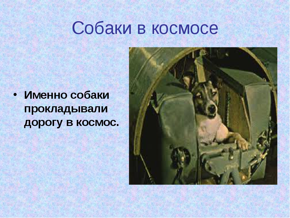 Собаки в космосе Именно собаки прокладывали дорогу в космос.