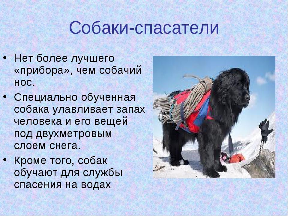 Собаки-спасатели Нет более лучшего «прибора», чем собачий нос. Специально обу...