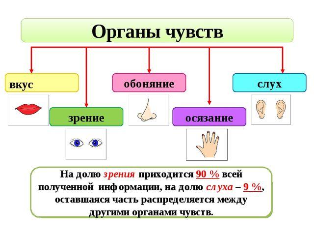 Органы чувств вкус зрение обоняние осязание слух С помощью какого органа чувс...