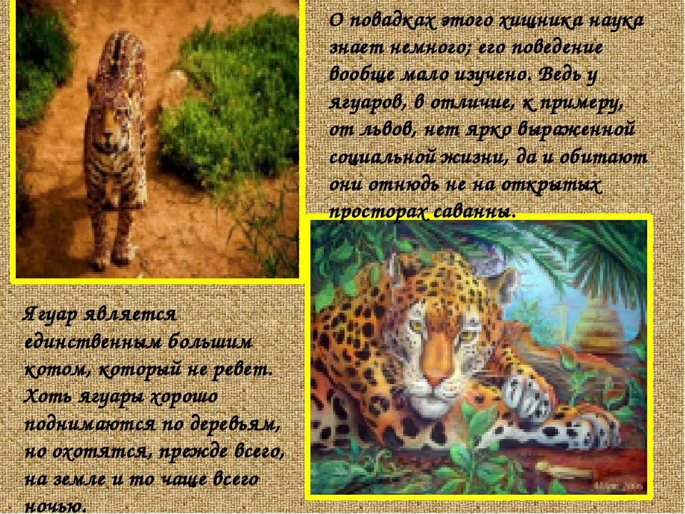 О повадках этого хищника наука знает немного; его поведение вообще мало изуче...