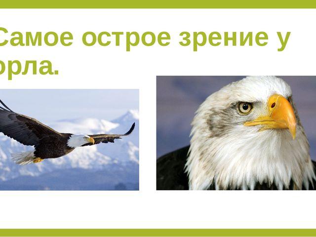 Самое острое зрение у орла.