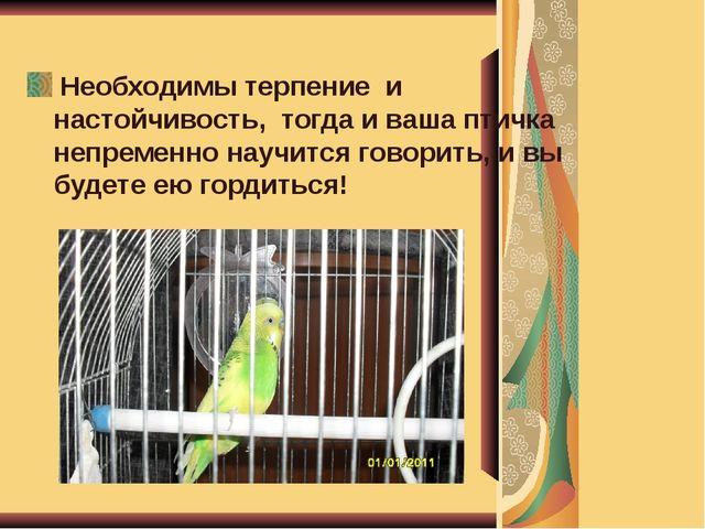 Необходимы терпение и настойчивость, тогда и ваша птичка непременно научится...