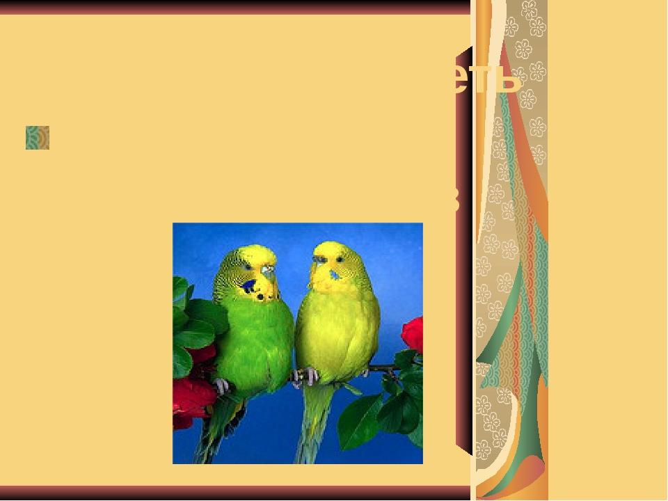 Моя мечта - иметь волнистых попугайчиков