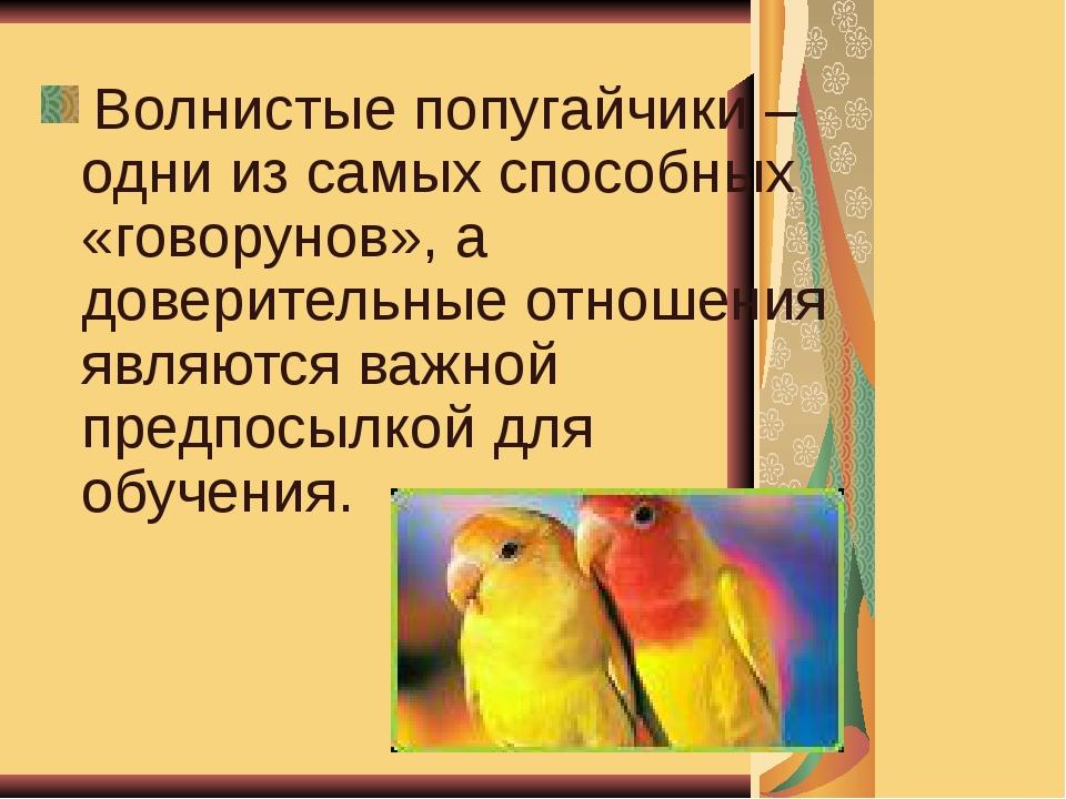 Волнистые попугайчики – одни из самых способных «говорунов», а доверительные...