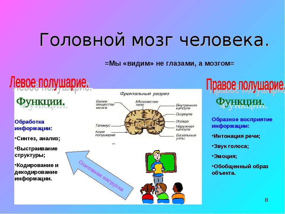 * Головной мозг человека. =Мы «видим» не глазами, а мозгом= Обработка информа...