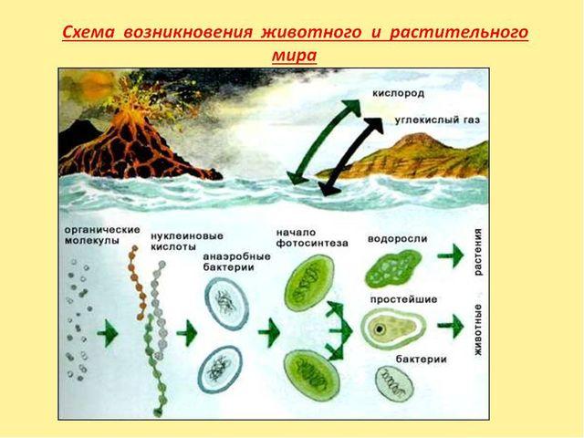 Этапы развития растительного мира. 3,5 млрд лет назад – появление первых живы...