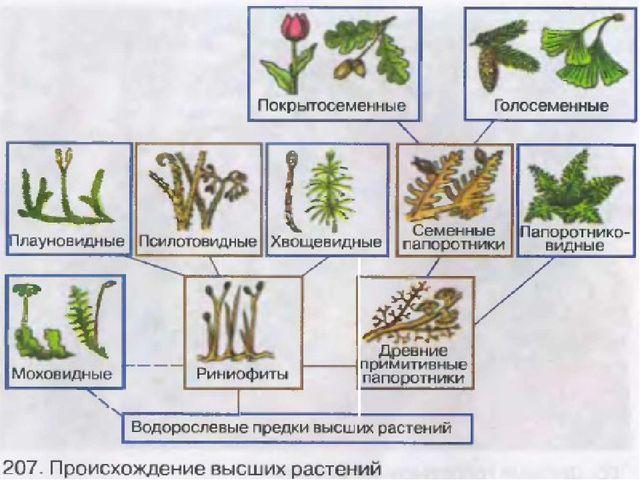 Господство бактерий и цианобактерий, образование плодородной почвы и биосферы...