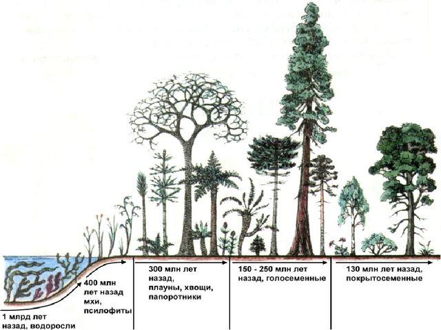 350 млн лет назад появление мхов, плаунов, хвощей и папоротников. Изменение к...