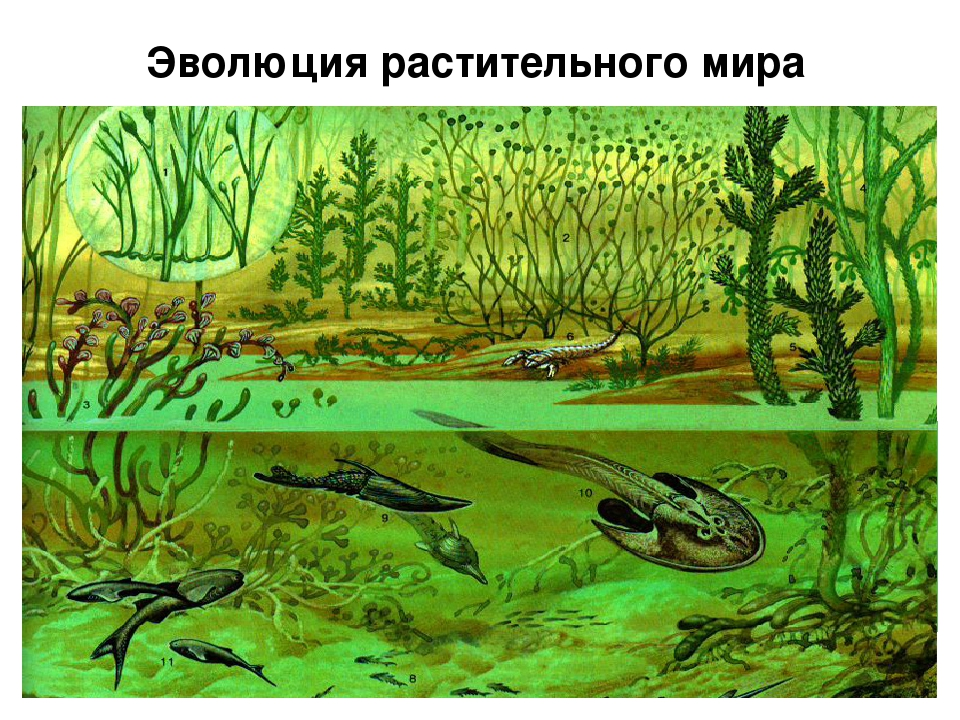Разнообразие растительного мира на Земле появилось исторически, т.е. развивал...