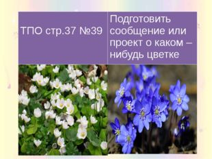 ТПО стр.37 №39 Подготовить сообщение илипроект о каком –нибудьцветке