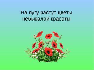 На лугу растут цветы небывалой красоты