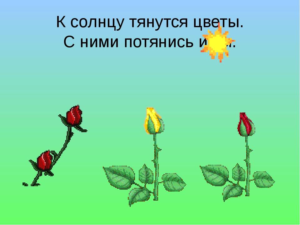К солнцу тянутся цветы. С ними потянись и ты.