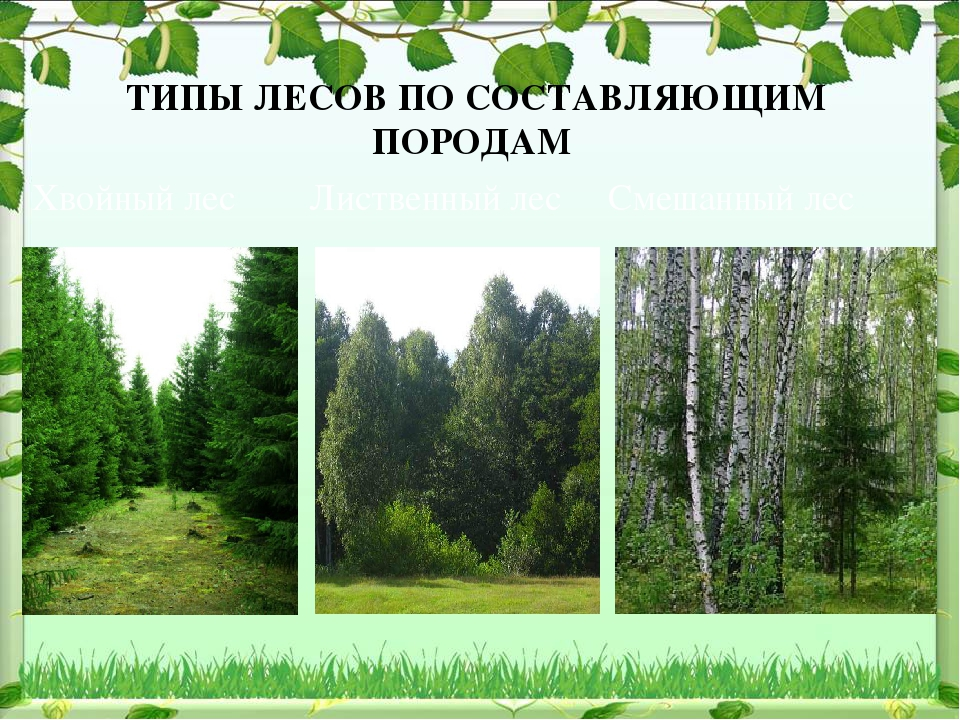 ТИПЫ ЛЕСОВ ПО СОСТАВЛЯЮЩИМ ПОРОДАМ Хвойный лес Лиственный лес Смешанный лес