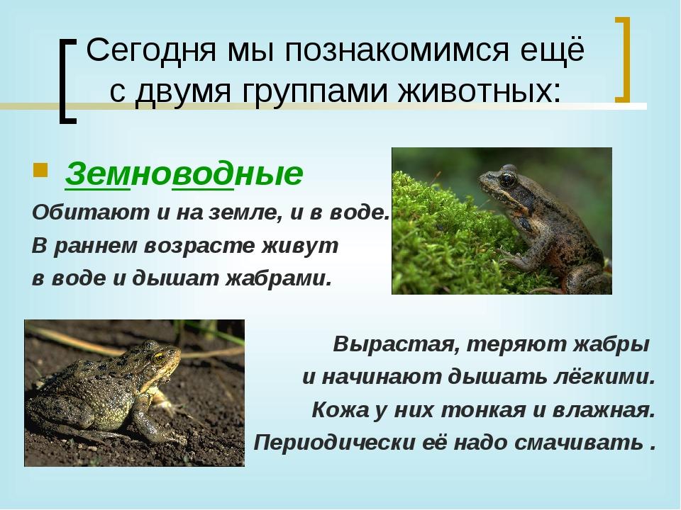 Сегодня мы познакомимся ещё с двумя группами животных: Земноводные Обитают и...