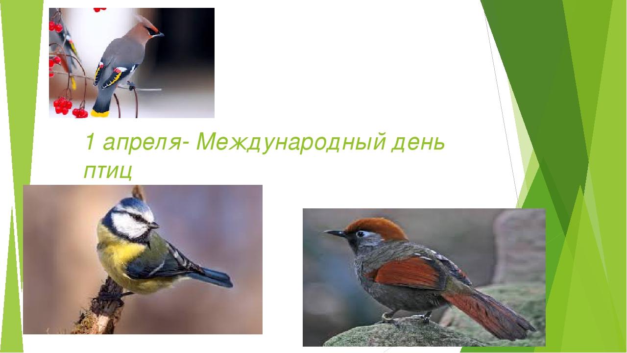 1 апреля- Международный день птиц