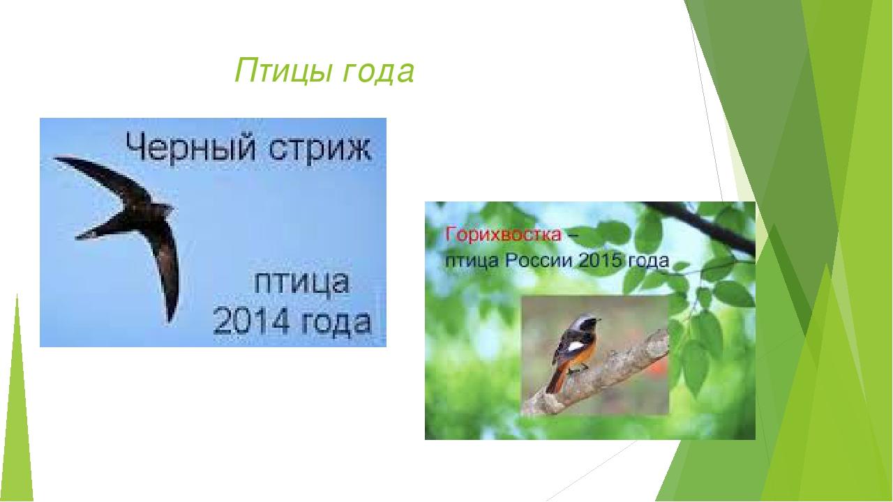 Птицы года