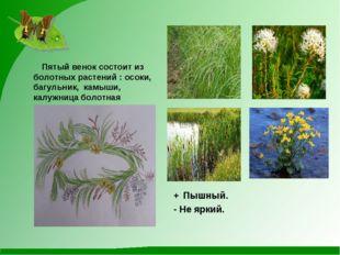 Пятый венок состоит из болотных растений : осоки, багульник, камыши, калужни