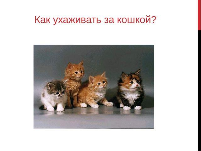 Как ухаживать за кошкой?