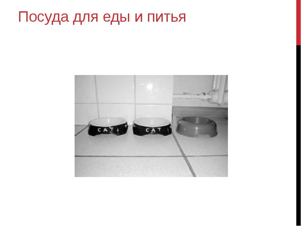 Посуда для еды и питья