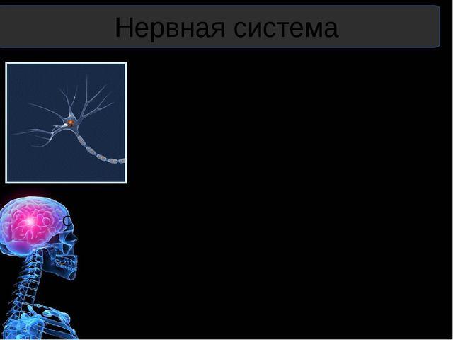 Установите соответствие между рефлексами человека и их характеристикой, приме...