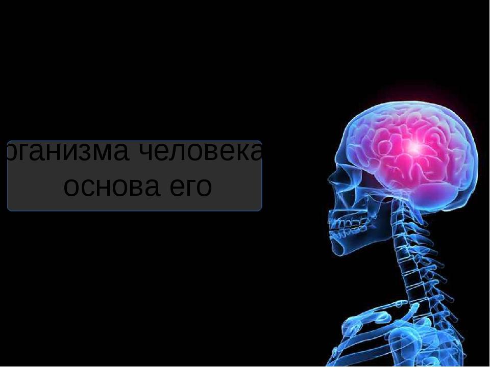 Тема: « Целостность организма человека – основа его жизнедеятельности» Выполн...