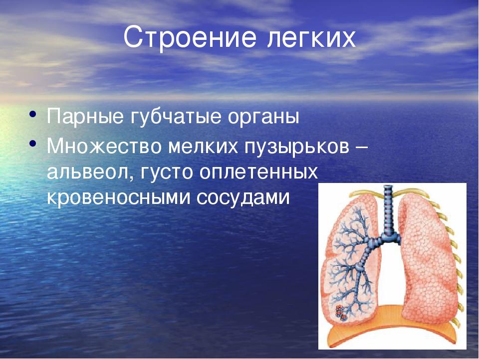 Строение легких Парные губчатые органы Множество мелких пузырьков – альвеол...