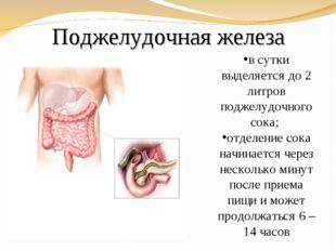 Поджелудочная железа в сутки выделяется до 2 литров поджелудочного сока; отде