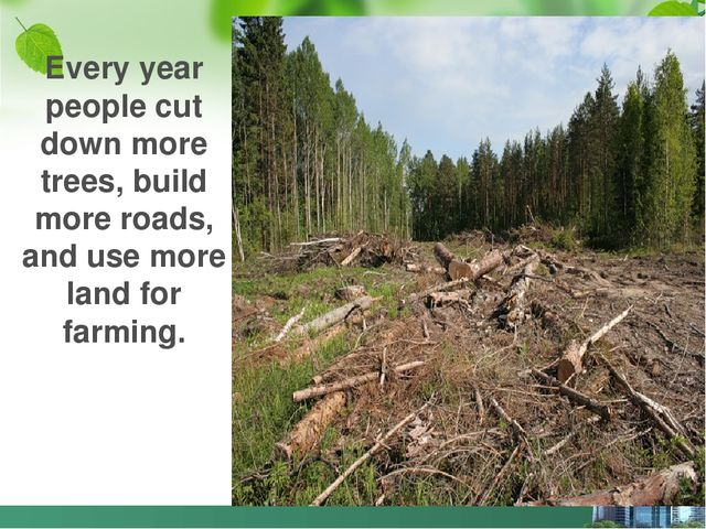 Every year people cut down more trees, build more roads, and use more land fo...