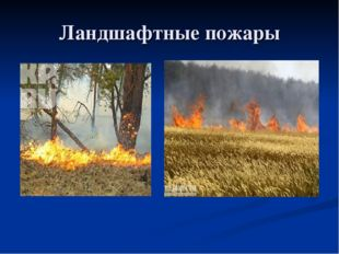 Ландшафтные пожары
