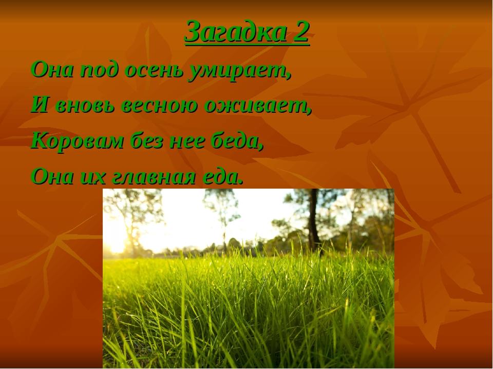 Загадка 2 Она под осень умирает, И вновь весною оживает, Коровам без нее беда...