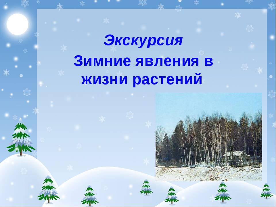 Экскурсия Зимние явления в жизни растений