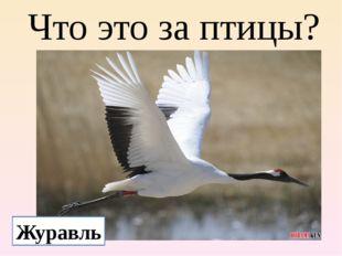 Что это за птицы? Журавль