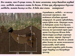 Берлогу медведь часто обустраивает в ямах. В случае отсутствия таковых медвед