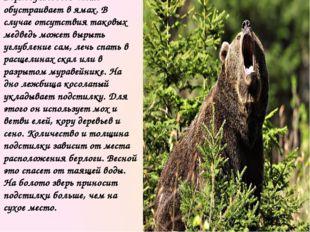 Зимний сон бурого медведя неглубок, в случае опасности животное просыпается и