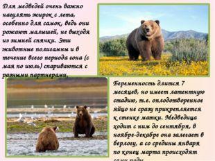 Места обитания бурых медведей разбросаны по всему миру, но их становится все