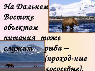 Медведь любитель побаловаться и рыбкой. Он отличный рыболов. Может подолгу на