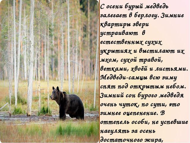 Все знают, что в конце осени, до того момента, пока выпадет первый снег, медв...