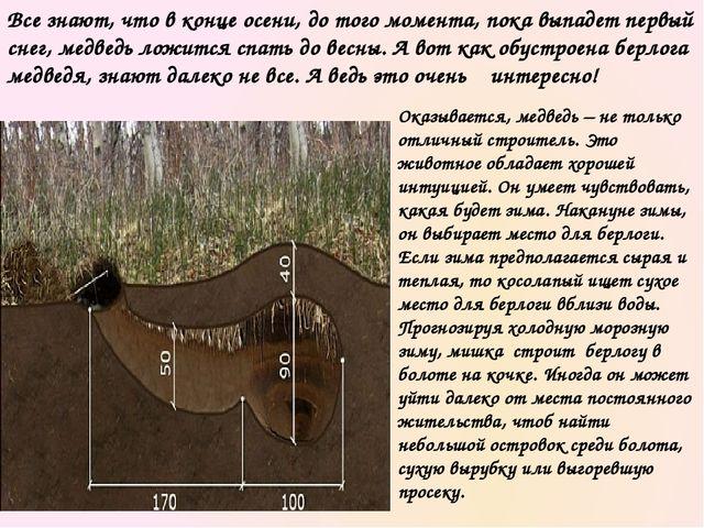 Берлогу медведь часто обустраивает в ямах. В случае отсутствия таковых медвед...