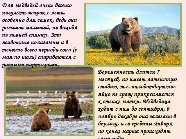 Места обитания бурых медведей разбросаны по всему миру, но их становится все...