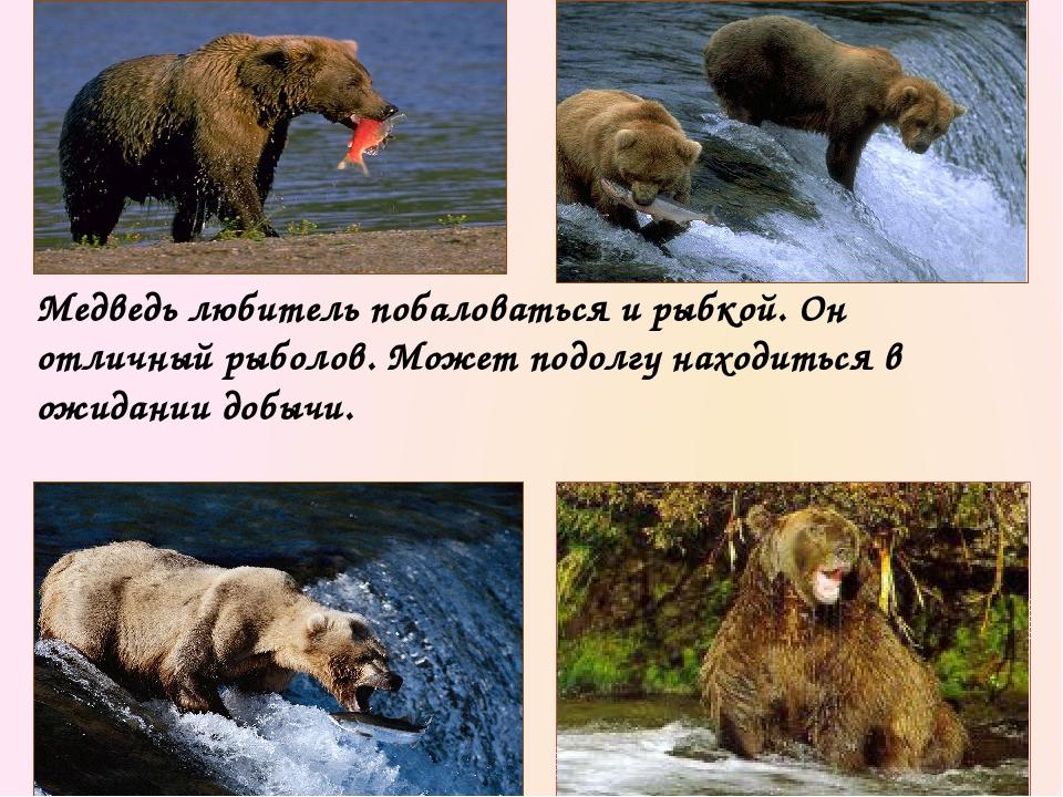 Разумеется, не все медведи стремятся к убийствам. Большинство из них предпочи...
